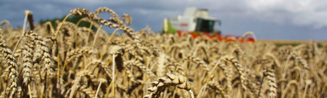 Store Hvededag – høst på Borreby